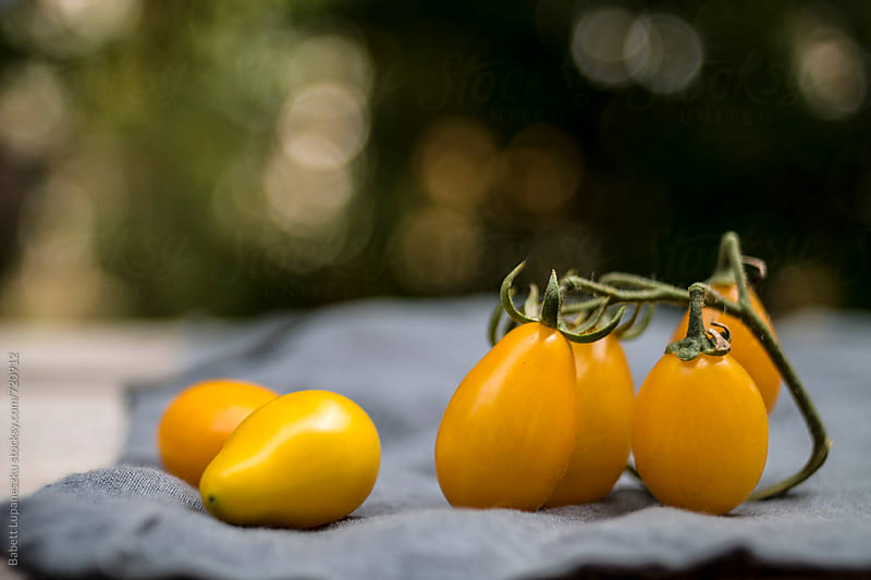 Yellow tomatoes on the table by Babett Lupaneszku for Stocksy United