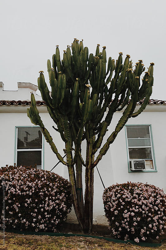 cactus and exterior  by Nate & Amanda Howard for Stocksy United