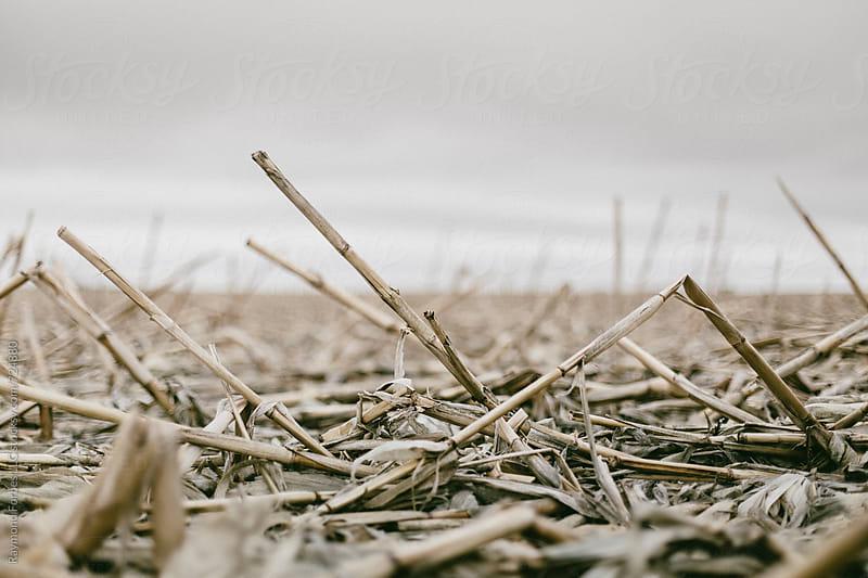 Winter Corn South Dakota by Raymond Forbes LLC for Stocksy United