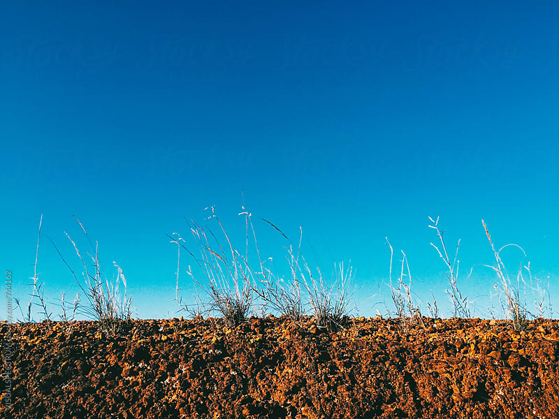 Profile of Wild Grass Growing in Red Soil by VISUALSPECTRUM for Stocksy United