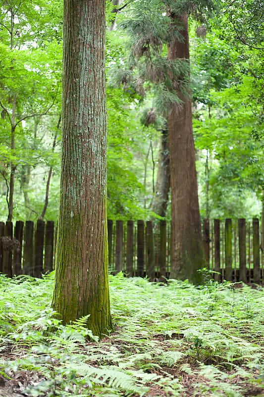 Kasuga Taisha area, Nara, Japan by Jon Rodriguez for Stocksy United