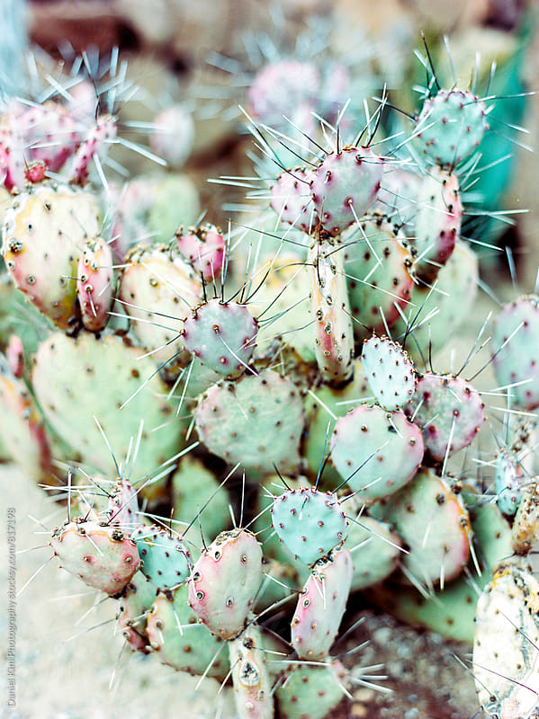 Colorful cactus by Daniel Kim Photography for Stocksy United