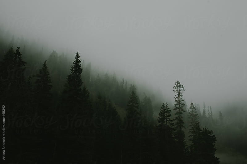 Mountain Fog by Ariana Babcock for Stocksy United