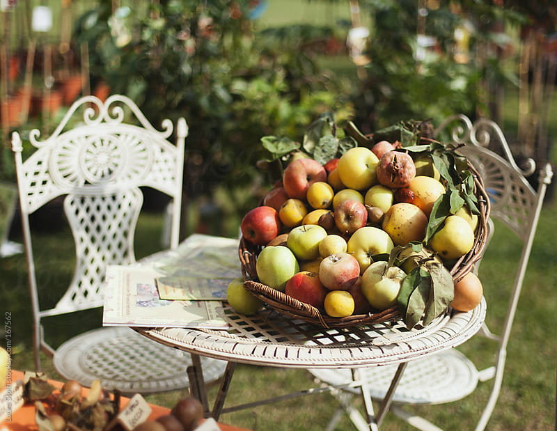 Ancient cultivars of apples and pears in basket by Laura Stolfi for Stocksy United