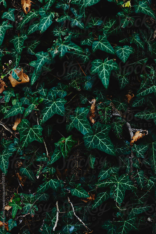 green background by Atakan-Erkut Uzun for Stocksy United