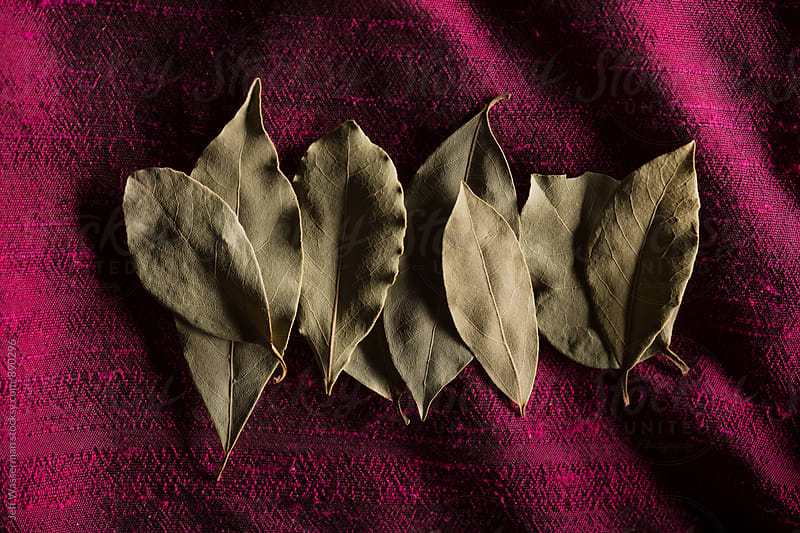 Bay Leaves on Purple by Studio Six for Stocksy United
