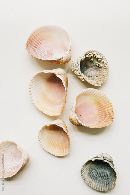 cockle shells scattered on a white background by Kelly Knox for Stocksy United