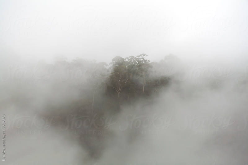 Rainforest through thick mist by Ben Ryan for Stocksy United