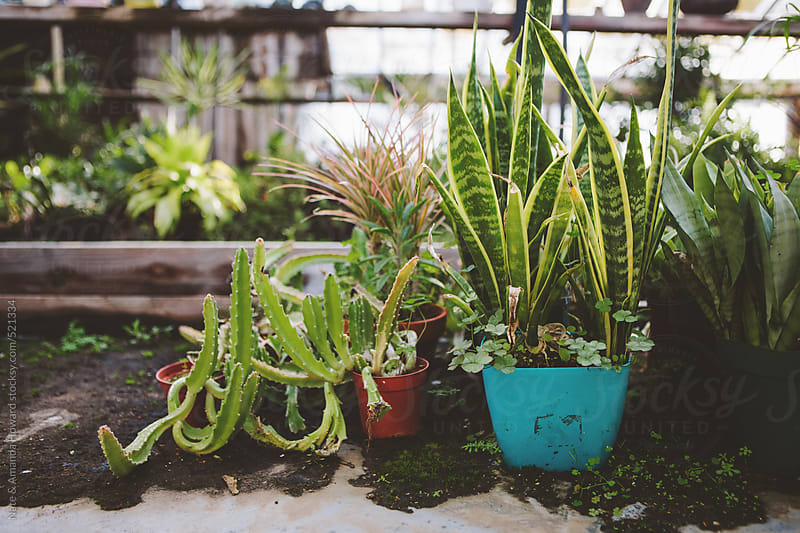 greenhouse plants by Nate & Amanda Howard for Stocksy United