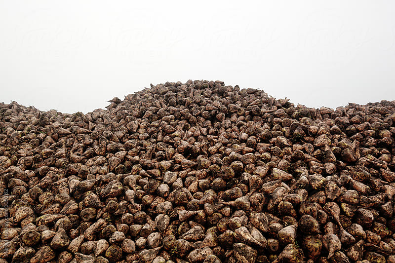 Sugar beet mountain by Marcel for Stocksy United