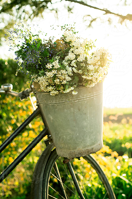 Bicycle with flowers by Studio Firma for Stocksy United