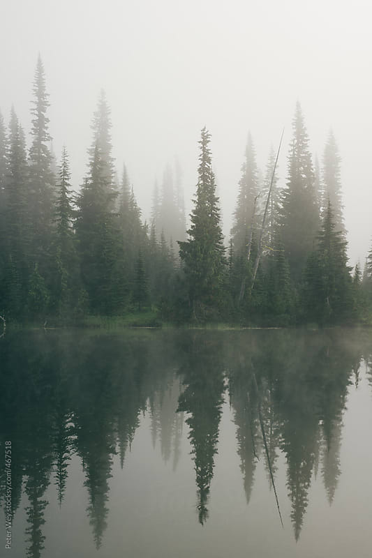 Foggy lake at Mt. Rainier by Peter Wey for Stocksy United