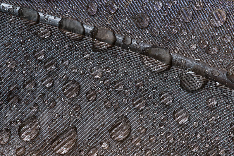 Feather and raindrops, closeup by Mark Windom for Stocksy United