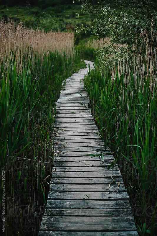 Wooden pathway crossing the swamp by Aleksandar Novoselski for Stocksy United