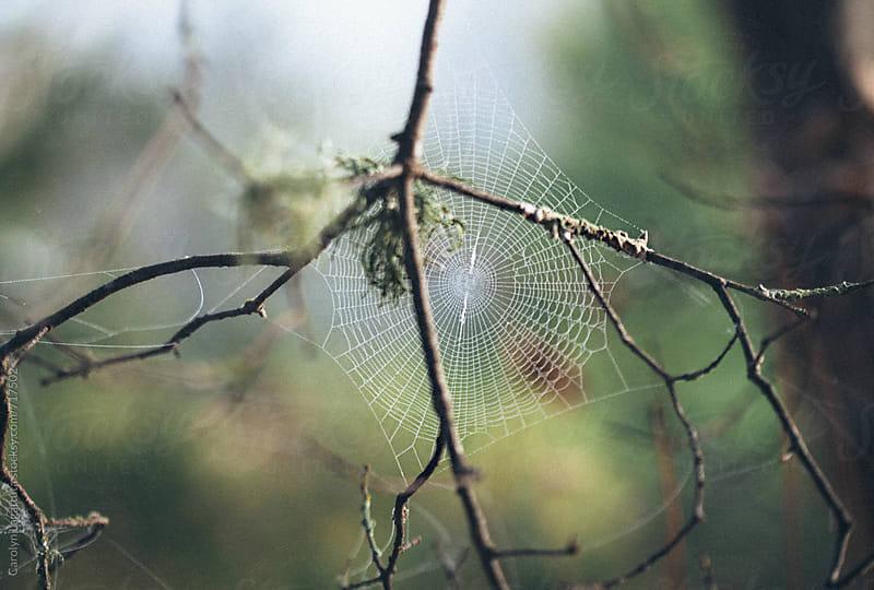 Beautiful spider web in the forest by Carolyn Lagattuta for Stocksy United