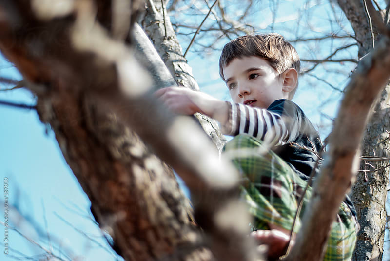 Boy climbs in the branches of a tree by Cara Dolan for Stocksy United