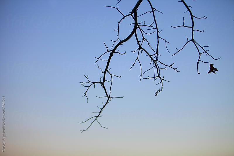 Silhouette of an empty tree branch with one leaf by Carolyn Lagattuta for Stocksy United