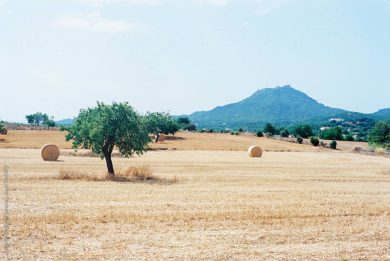Majorca Farm Scene by Andrew Spencer for Stocksy United