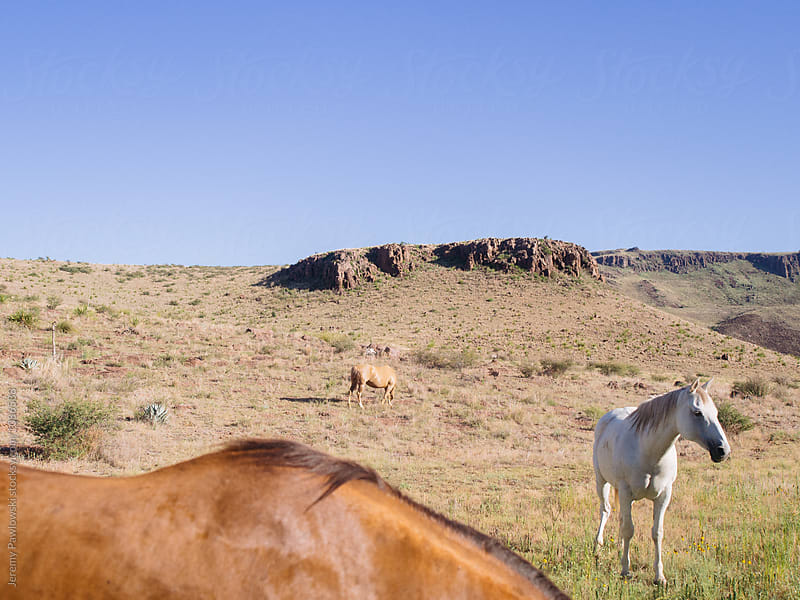 Wild horses roaming in west Texas dry land with geological features. by Jeremy Pawlowski for Stocksy United