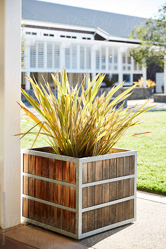 Flax plant in wood and metal container by Trinette Reed for Stocksy United