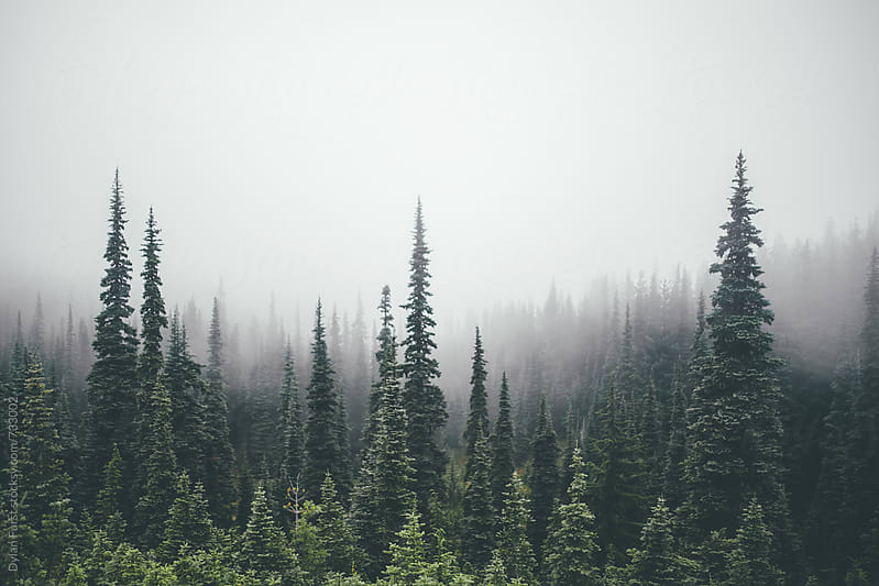 Foggy Day by Dylan Furst for Stocksy United