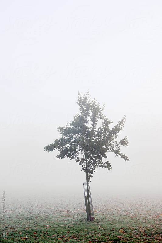 A solitary tree shrouded in fog by James Ross for Stocksy United