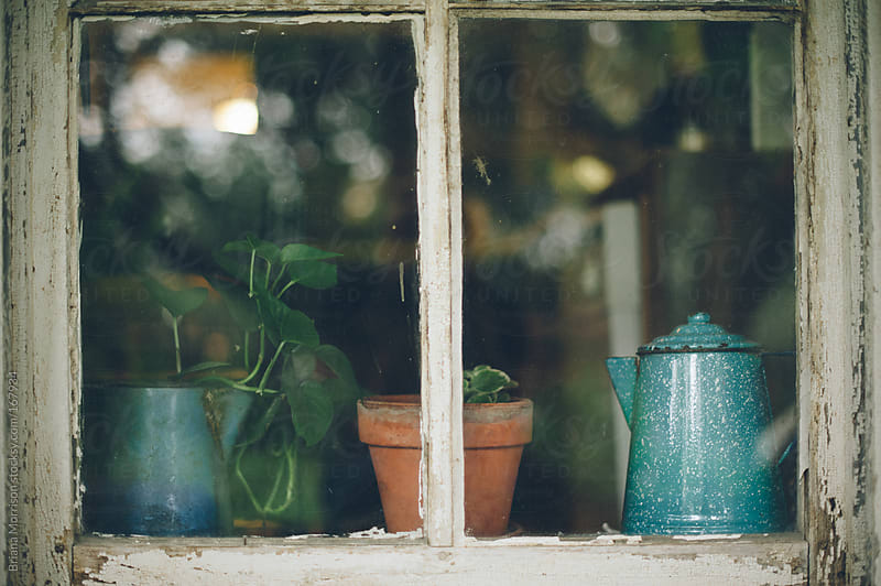 Potted Plants and a Blue Kettle in a Window by Briana Morrison for Stocksy United