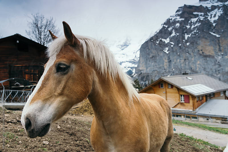 Horse in Switzerland by MaaHoo Studio for Stocksy United