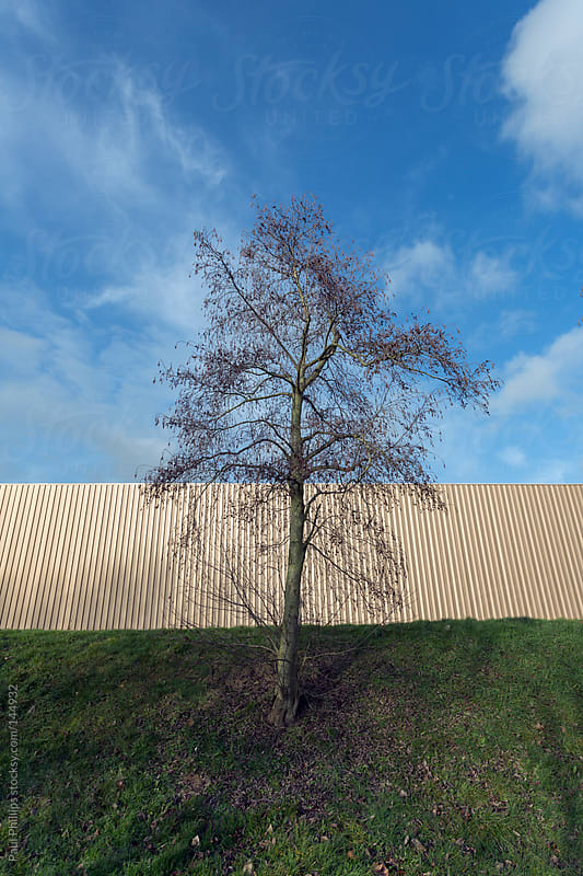 Solitary tree and industrial building against blue sky by Paul Phillips for Stocksy United