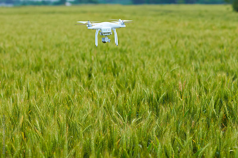 drone fly over wheat field by Bo Bo for Stocksy United