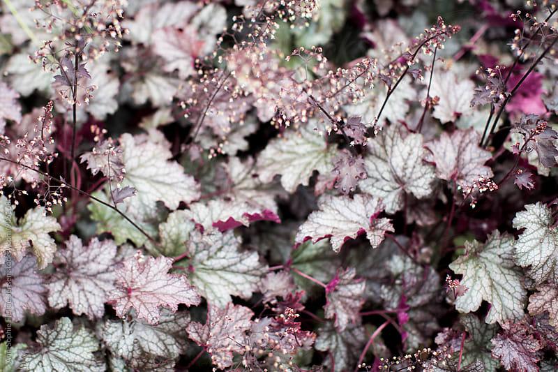 Purple plants by Ann-Sophie Fjelloe-Jensen for Stocksy United