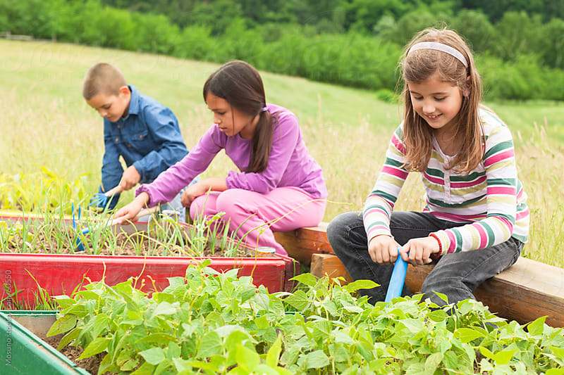 Children working a garden. by Mosuno for Stocksy United