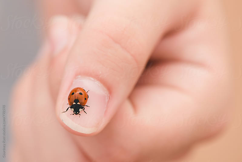 Catching Ladybugs by Courtney Rust for Stocksy United