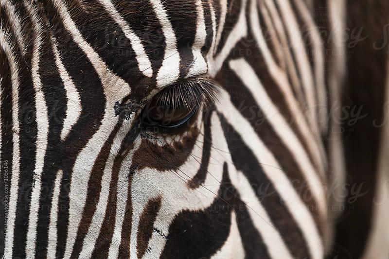 Zebra eye by Marilar Irastorza for Stocksy United