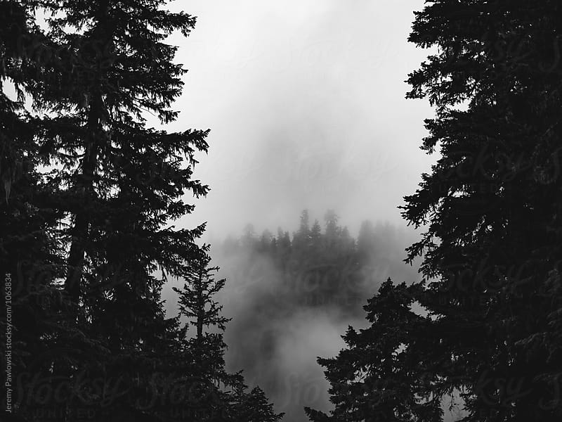 Black and white image of thick fog and pine trees by Jeremy Pawlowski for Stocksy United