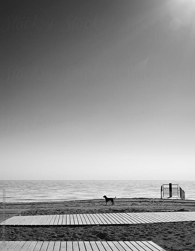 Lonely dog on beach in sunlight by Guille Faingold for Stocksy United