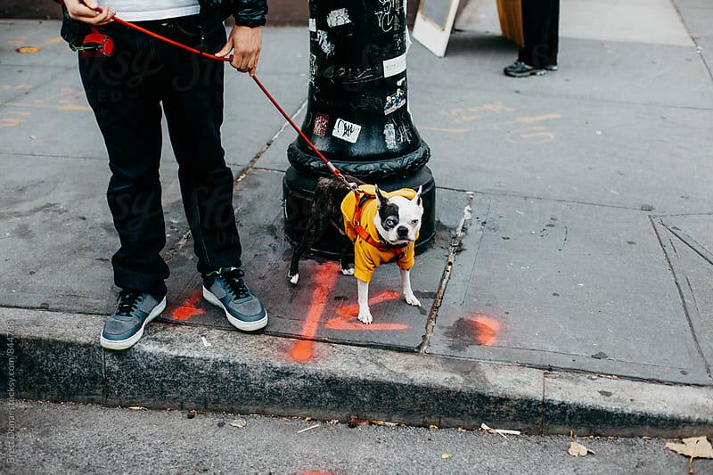 City Dog by Brett Donar for Stocksy United