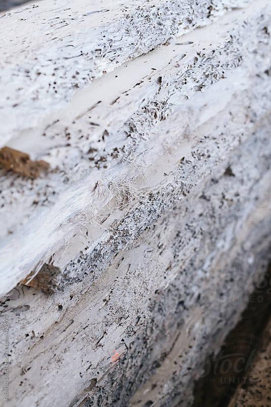 worm-eaten wood by Alberto Bogo for Stocksy United