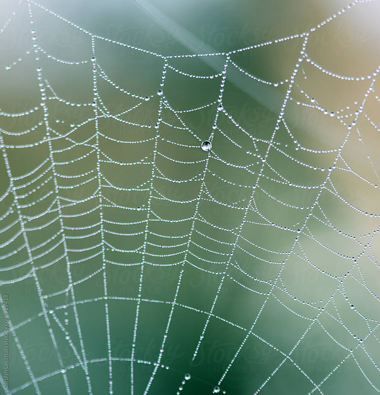 Macro of  dewy, droplet filled spider web by Carolyn Lagattuta for Stocksy United