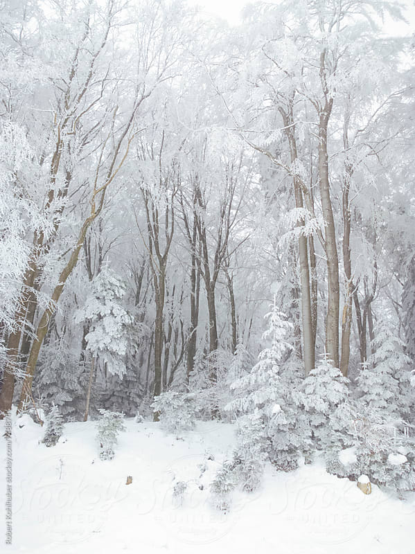 Winter forest in austria by Robert Kohlhuber for Stocksy United