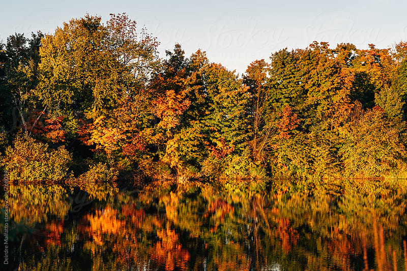 trees in autumn by a reflecting pond by Deirdre Malfatto for Stocksy United