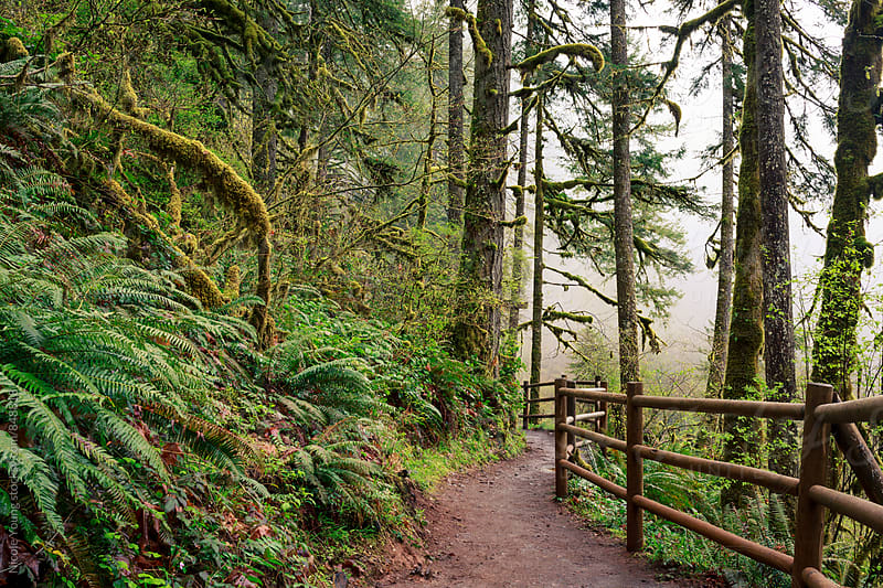 Foggy Forest Trail by Nicole S. Young for Stocksy United