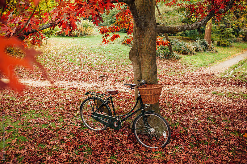 Bicycle in autumn by Kitty Gallannaugh for Stocksy United