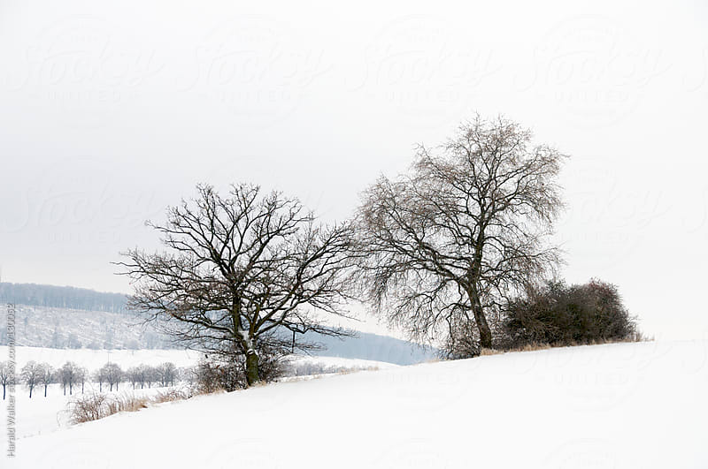 Snowy Weser Uplands by Harald Walker for Stocksy United