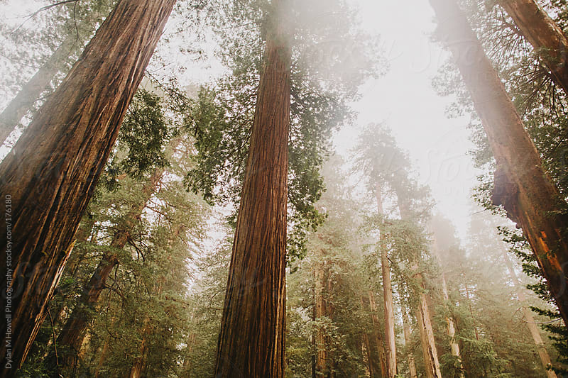 Look Up To the Giants by Dylan M Howell Photography for Stocksy United
