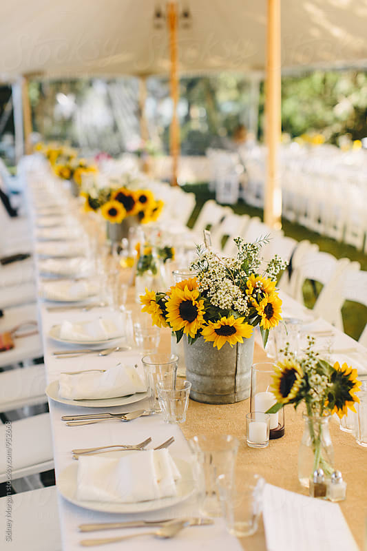 Wedding Reception Table with Sunflowers by Sidney Morgan for Stocksy United