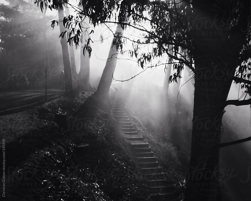 Big Sur Fog in Black and White by Christian Gideon for Stocksy United