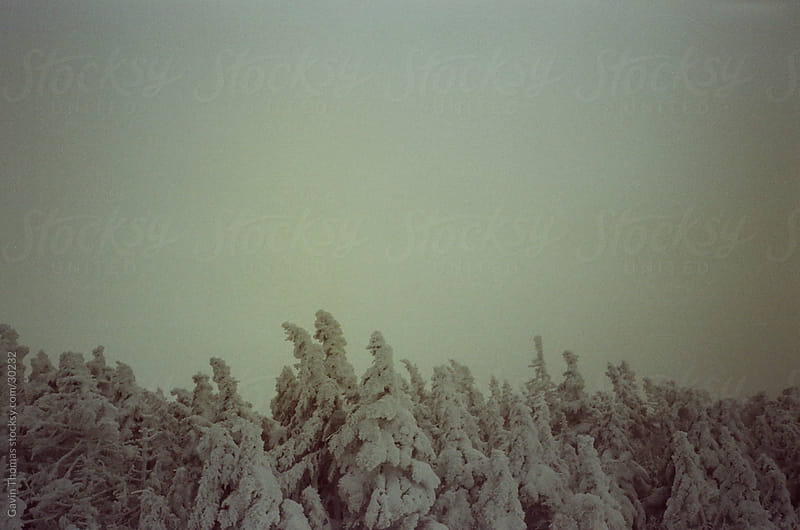 snow covered trees in vermont by Gavin Thomas for Stocksy United
