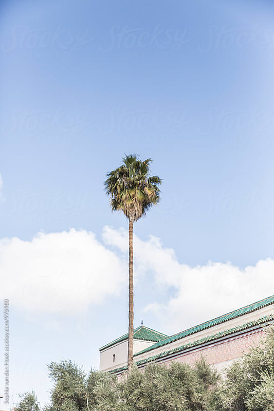 Palm tree in Marrakech by Sophia van den Hoek for Stocksy United