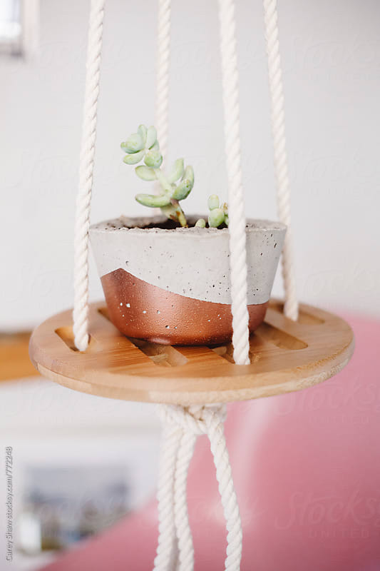 Cement planter on hanging wood shelf by Carey Shaw for Stocksy United